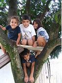 Brazilian Children in a Mango Tree